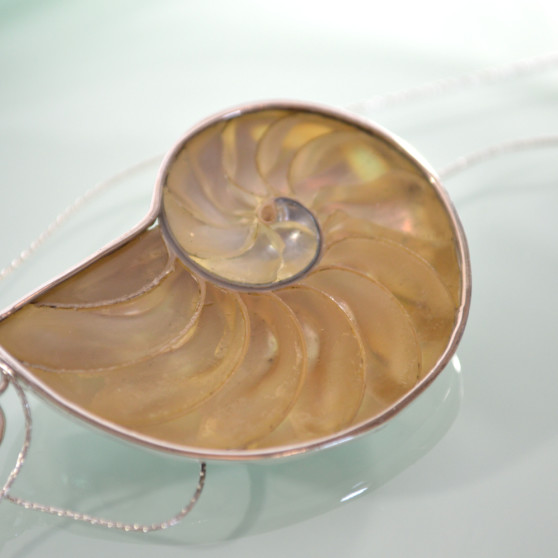 Spotted Nautilus with Sterling Silver 3